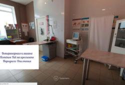 Ветеринарная клиника на проспекте Народного Ополчения - ветклиника Котёнок Гав